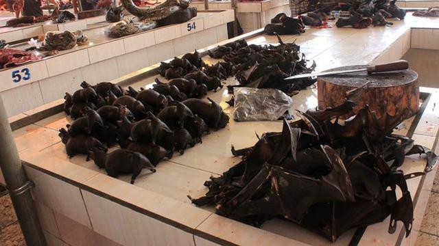 Pasar Ekstrem Binatang Liar Tomohon Sulut Mirip Pasar Wuhan China yang Sebarkan Virus Corona